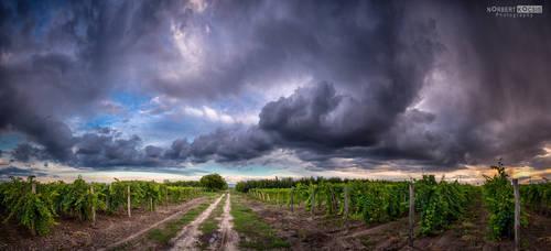 Harvest rain by NorbertKocsis