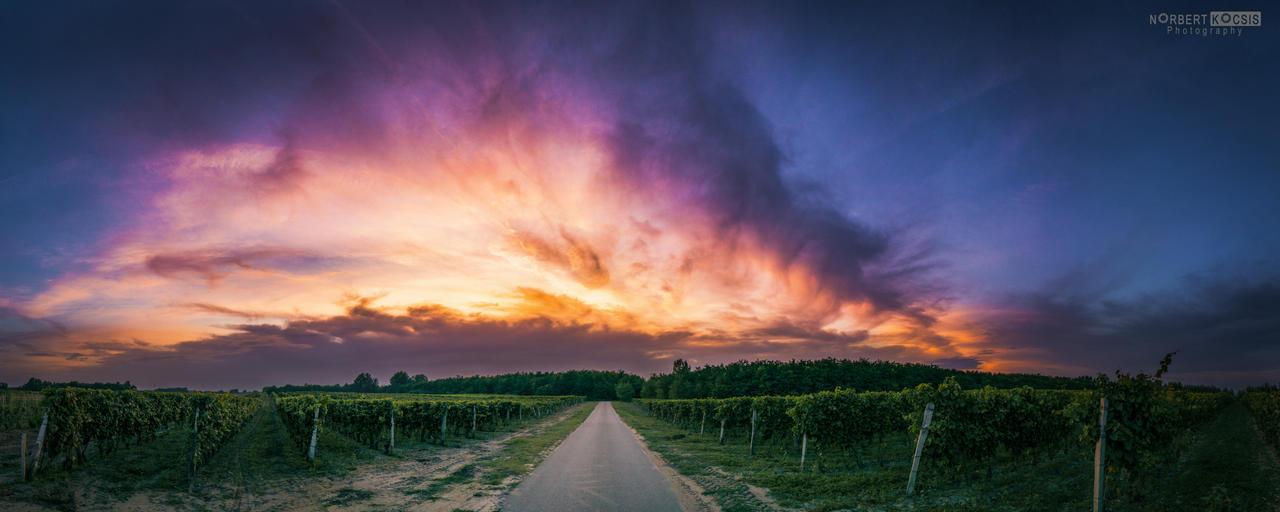 The harvest season by NorbertKocsis