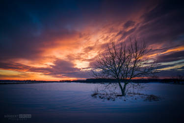 Snowy sunset for christmas by NorbertKocsis
