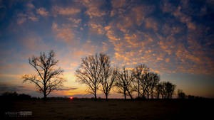 Sunset at tree row by NorbertKocsis