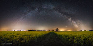 Milky way panorama and colza field