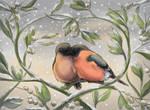Bullfinches under the misteltoe.