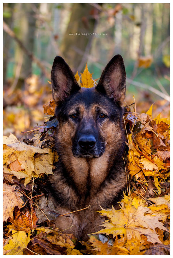 autumn fun by corniger-aries