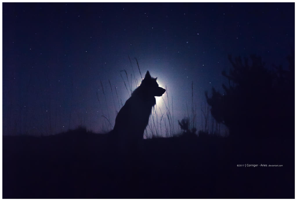 dog and fullmoon by corniger-aries