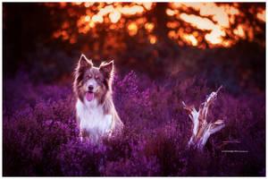 heath I by corniger-aries