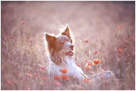 puppy and poppy I