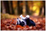autumn (6of10)