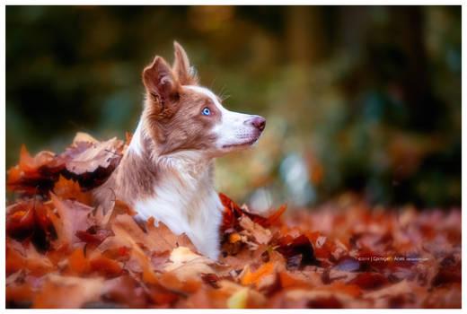 autumn (7of10)
