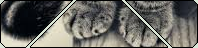 F2U | cat page decor 2 by queen-meme