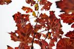 ..autumn dress.. by TricksterNabi