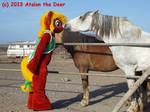 MLP Pony meets Horse 01