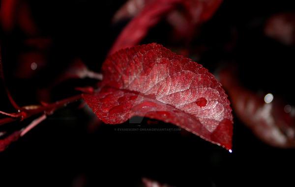 Burgundy by Evanescent-Dream