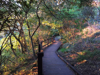 Nature path by drcrazy102