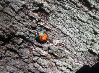 Lady on a tree by drcrazy102