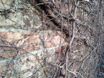 Wall of winter vines by drcrazy102