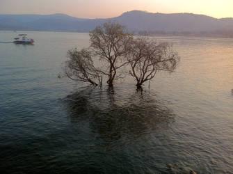 Sunken Tree by drcrazy102