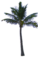 Palm Tree Tube Stock PNG by digitaltwist