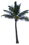 Palm Tree Tube Stock PNG
