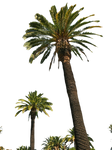 Palm Tree Tube Stock II PNG