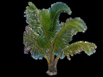 Palm Tree Tube Stock III PNG