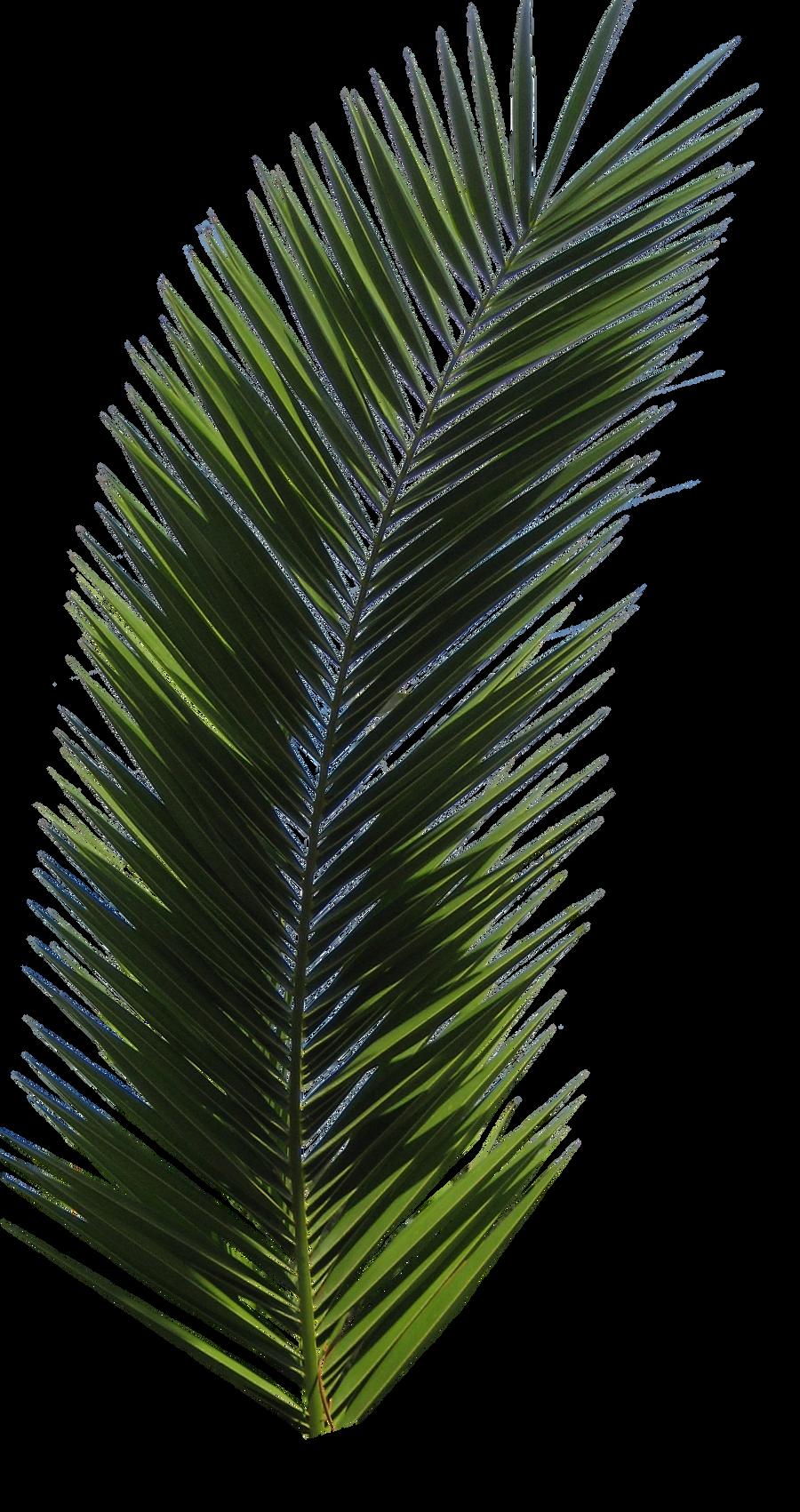 Palm Tree Tube Stock VI PNG