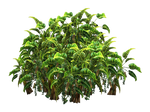 Tropical Plant stock tube PNG