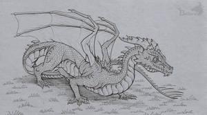 Sharpskin drake