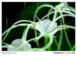 Blooming Tendrils