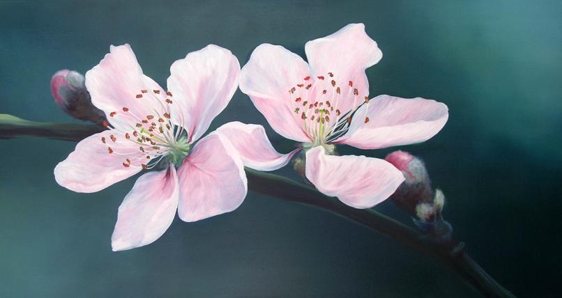 Cherry Blossom Oil Painting By Ele Art On DeviantArt