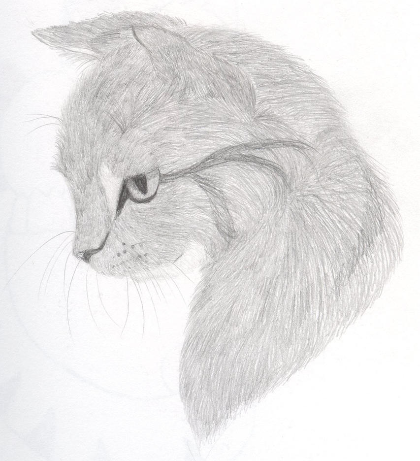 How To Draw A Cat Head Draw A Realistic Cat | Male Models ...