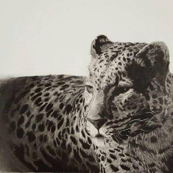 leopard full image by easternconferende