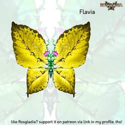 Rosgladia: Flavia