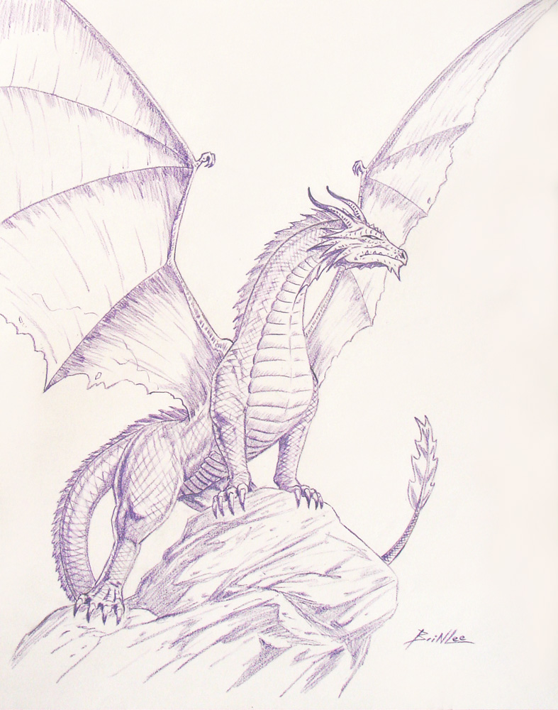 Dragon Sketch by Taman88