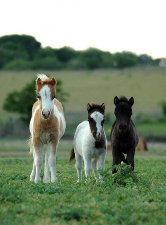 Cute Baby Horses By Ponyporb On Deviantart