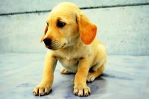 baby dog by photodeny