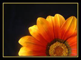 Sunshine...... by Pjharps