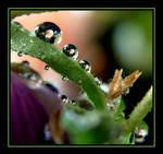 Water Drops....