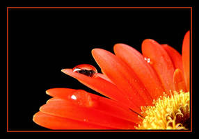 Orange.... by Pjharps