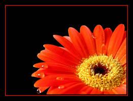 Orange....3 by Pjharps