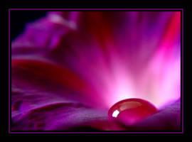 Purple velvet.... by Pjharps
