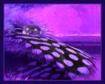 .:Purple:.
