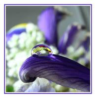 .::Flowers Inside::. by Pjharps