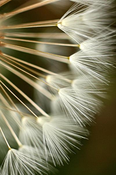 ..:: Make a Wish ::.. by Pjharps