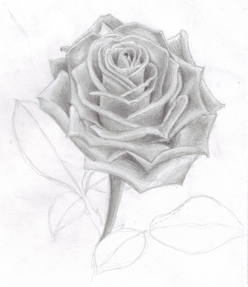 rose in 4B pencil by whyamibothering on DeviantArt