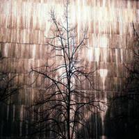 That Depressive Tree Song