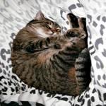 When Kitty Dreams by DasGhul