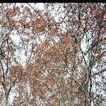 Definitely Autumn. by DasGhul