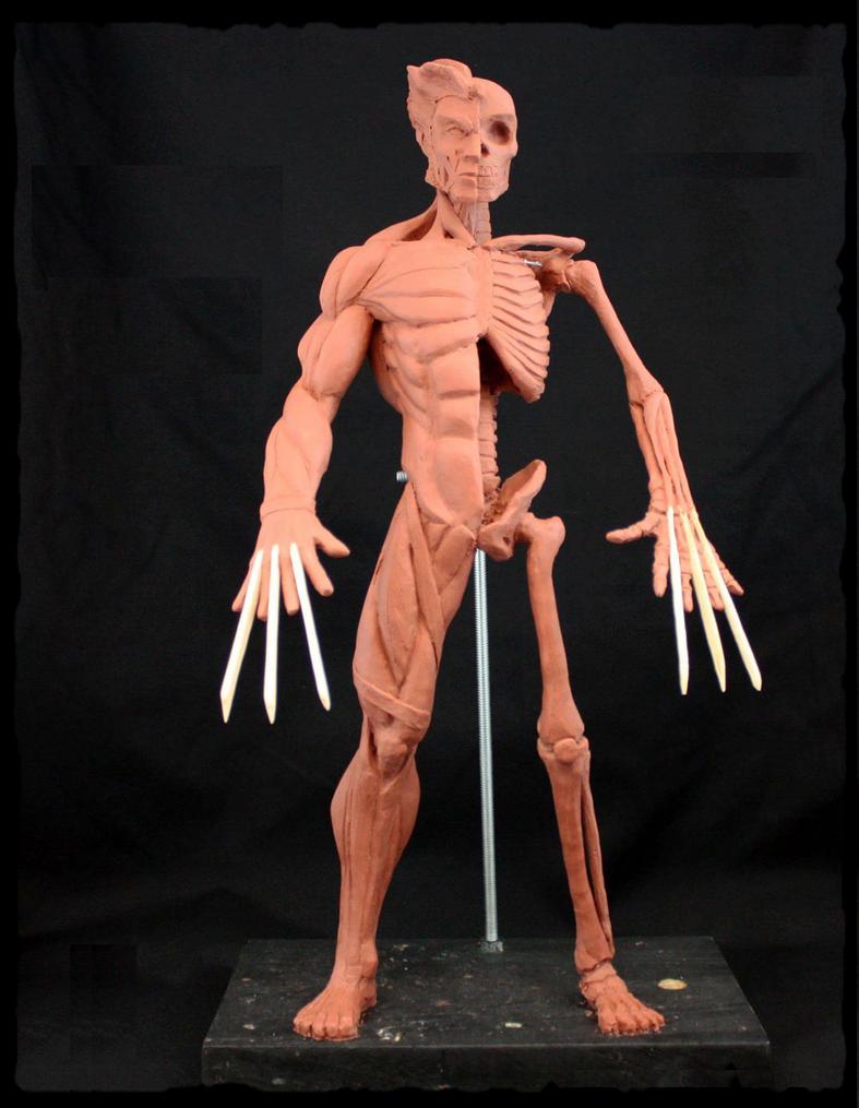 Anatomy Study by Chicharo