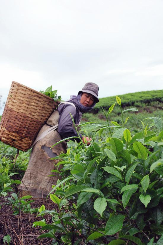 kebun teh dan ibu by daunbusuk