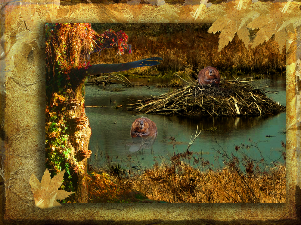 Beaver Lodge by 3punkins